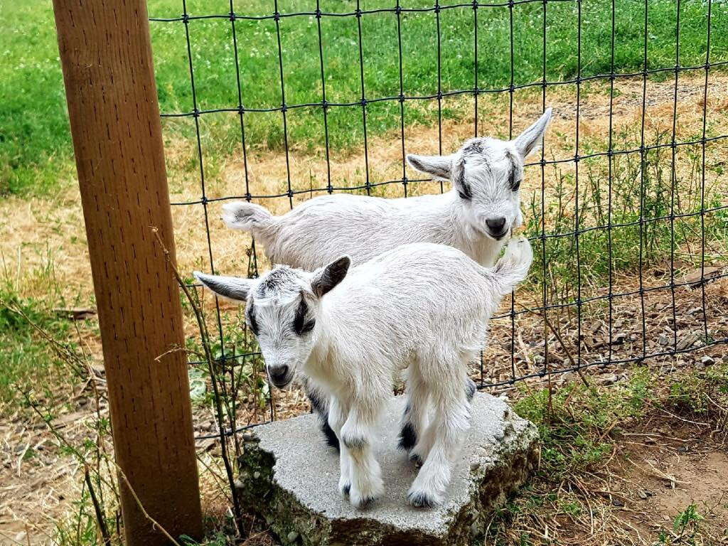 contact us - goats at taves family farms
