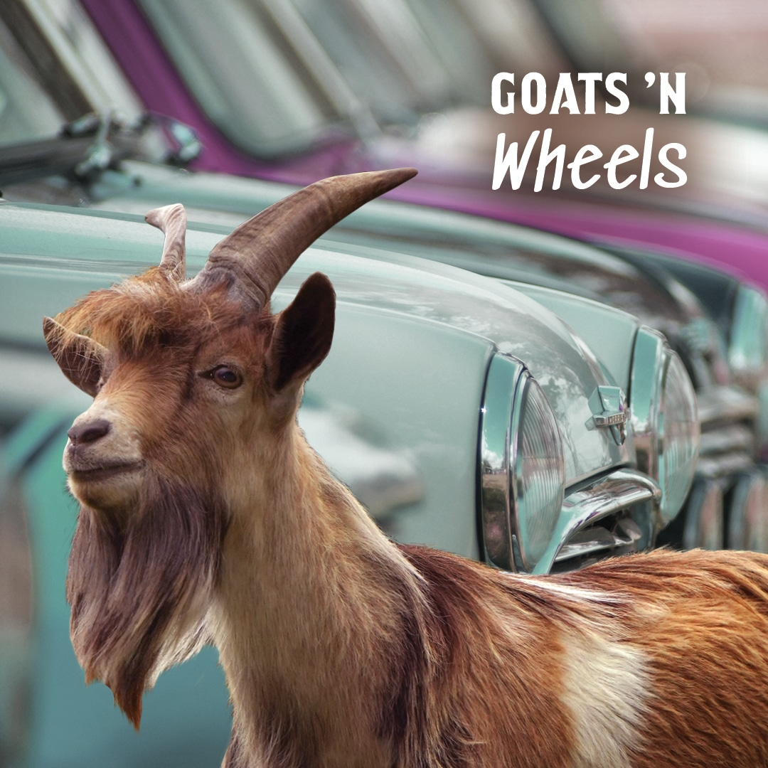 Goats and Wheels Event at Taves